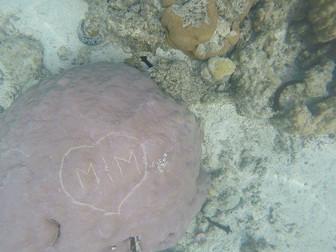 珊瑚への落書き発見 島中の人々が大論争中
