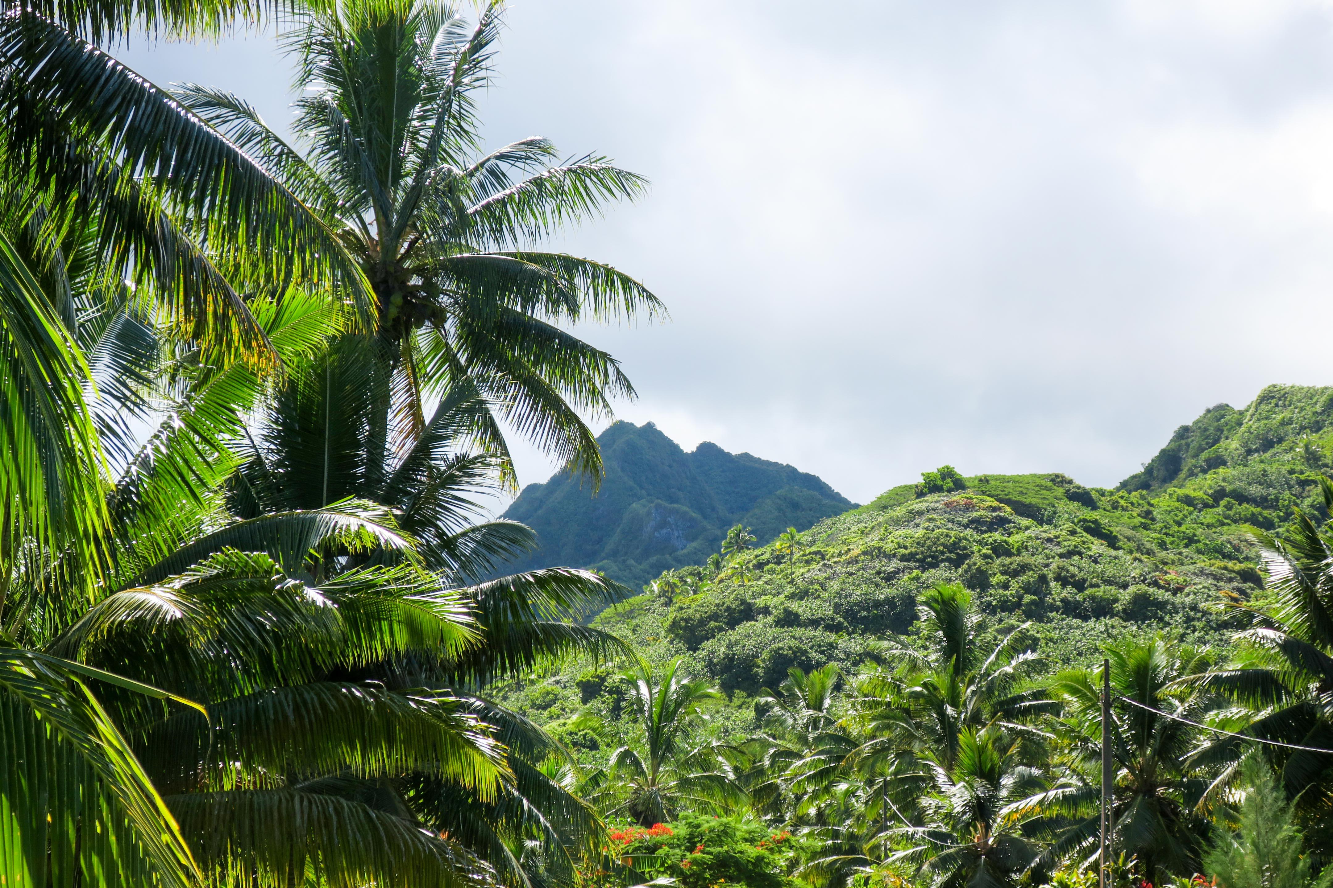 rarotonga mountain from natangi