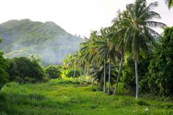 muri area field