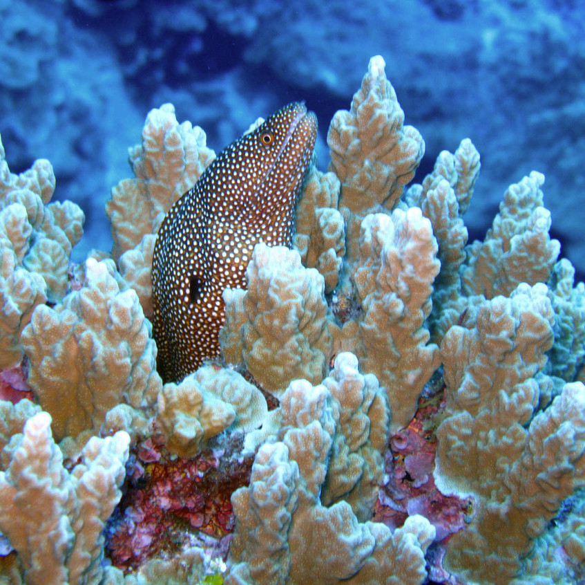 diving images_01