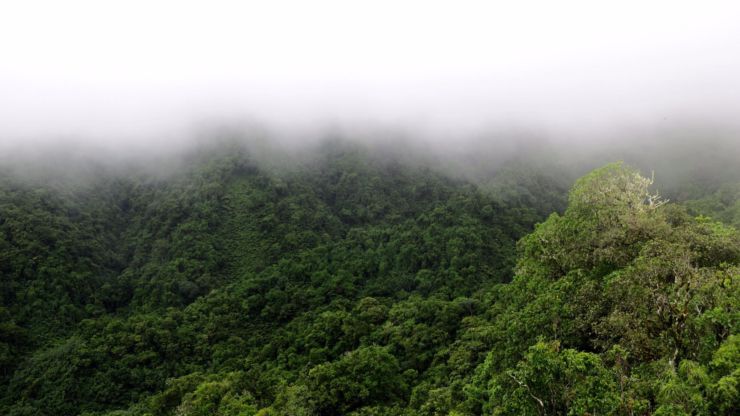 cross island trek view of inner island jungle
