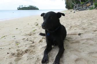 約100年振りにアイツタキ島に犬が来る! 島の子供達に大人気🐶