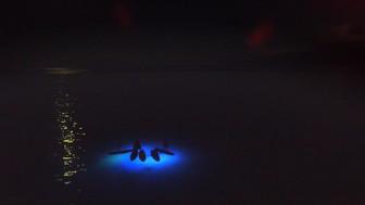 夜のムリビーチを満喫するアクティビティ ナイトSUP