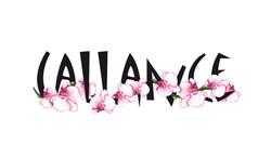 CALLANCE