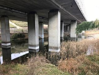 高速の下の池