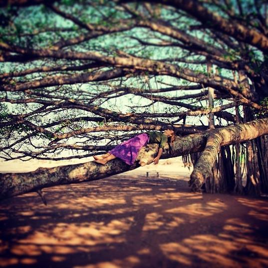 Kökler - Mysore, Hindistan
