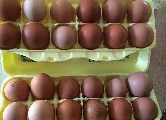 Eggs (Free Range)