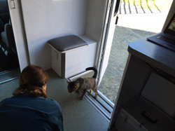 Cat walking in to the mobile hospital