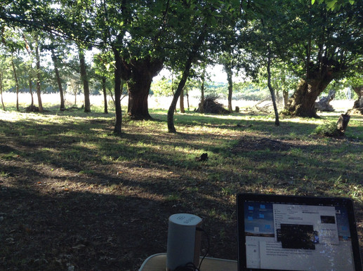 Revisando material en bosque de castaños