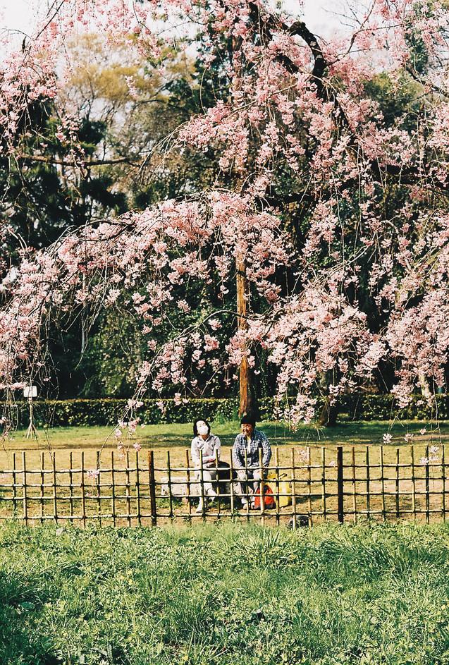 Japan 35mm - HALUK.co_-11.jpg