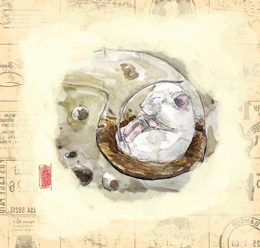 Sleeping mouse by Donata E. Zawadzka - Canvas print