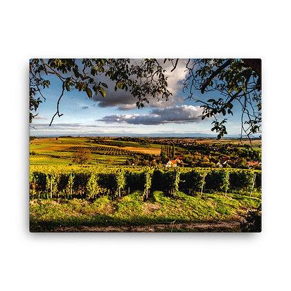 Vineyards of France- Canvas print, landscape photography