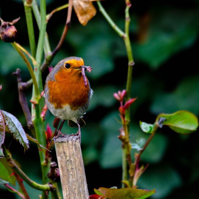 Robins Nest- plaited twine sac * Domek z makramy dla rudzików
