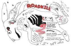 Roadkill - Infographic
