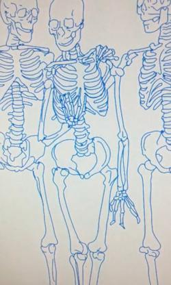 Skeletons - Digital Drawing