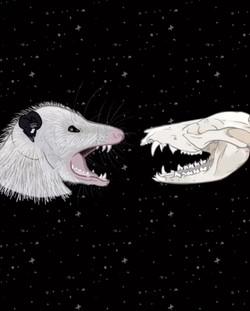 Opossum - Digital Drawing