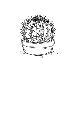 Cactus - Hand Illustration