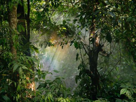 """Tu B'Shvat: """"Life holds the possibility of inner transcendence"""""""