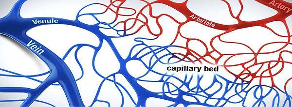 CapilaryBed.jpg