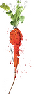 SpringsFoodPantrycarrot_rgb_edited.png