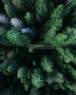 Swedish Forest geran-de-klerk-WJkc3xZjSX