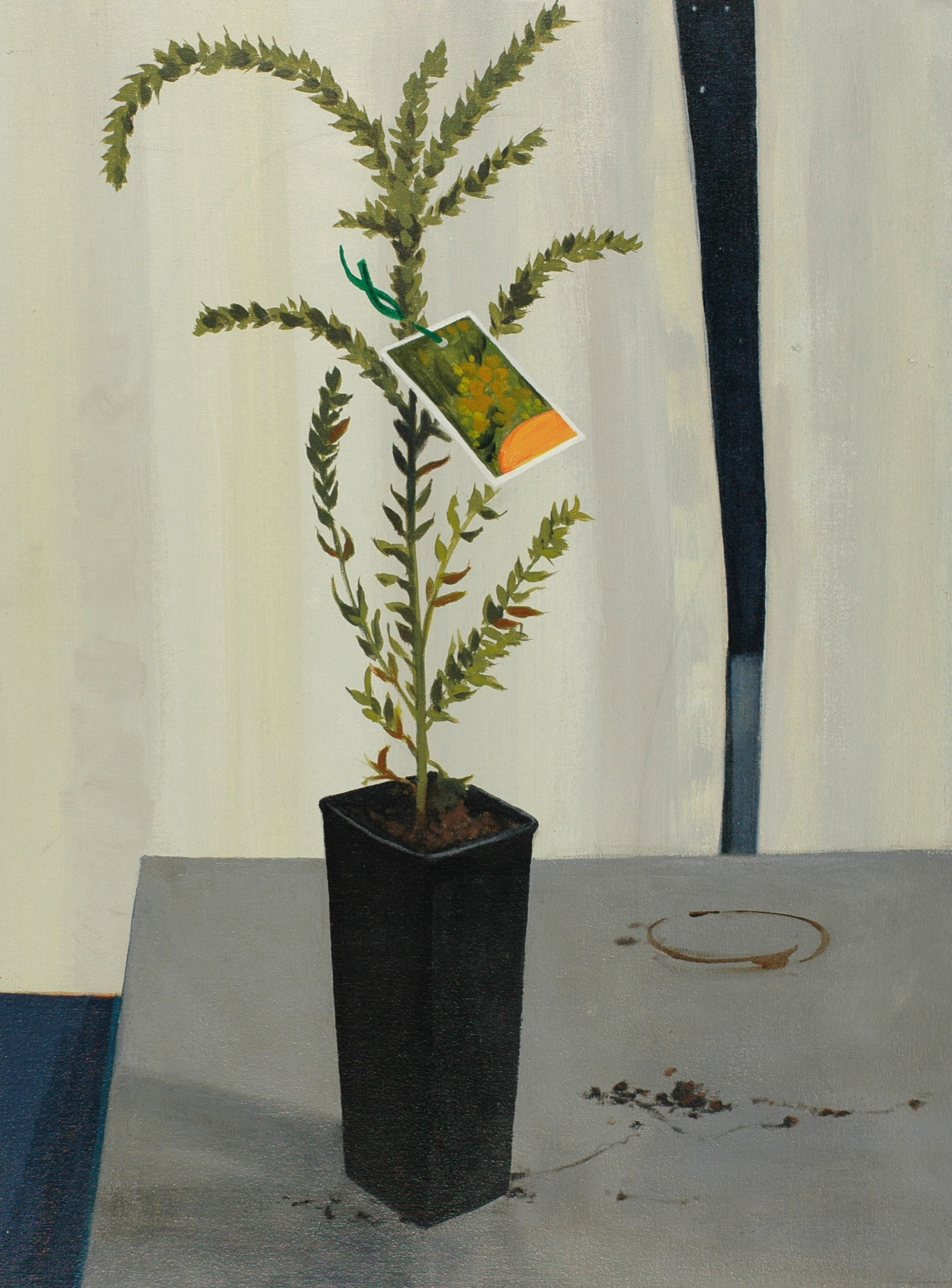 Wattle, 1996