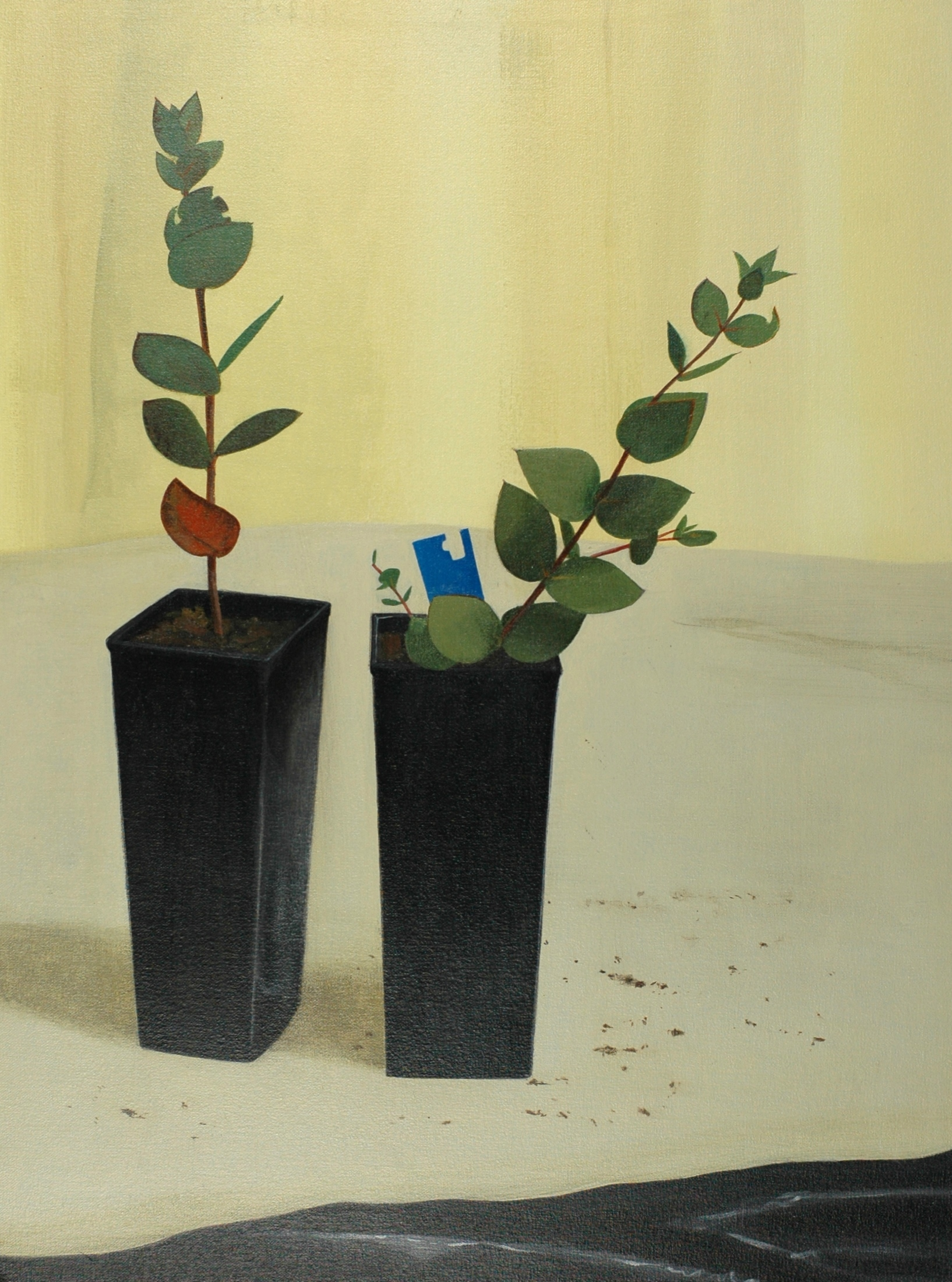 Two plants, 1996