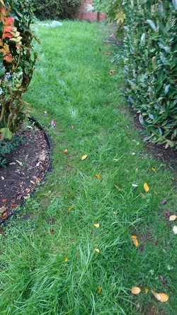Maintained grass path