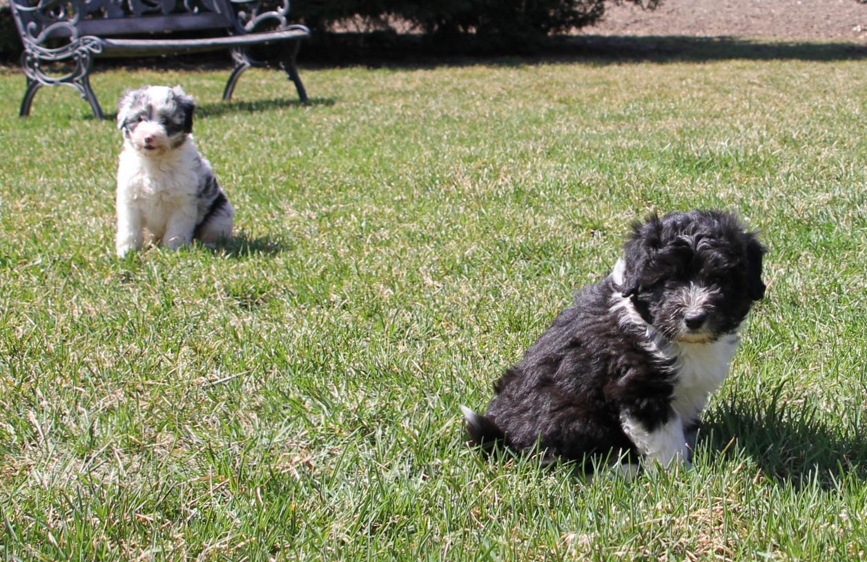 Bruno and Balto