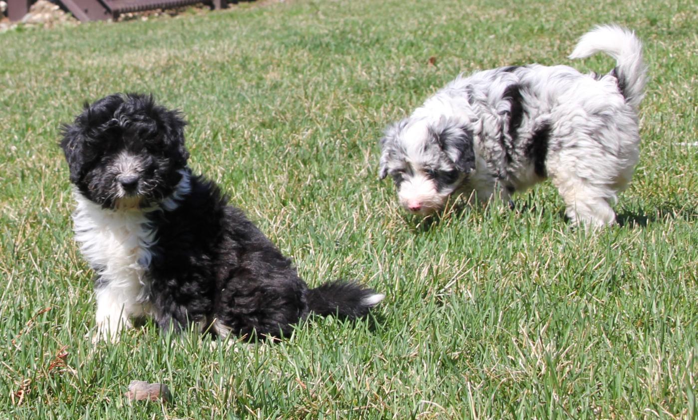 Balto and Bruno