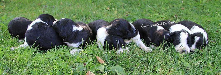 Mishia's pups