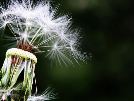 L'acupuncture: Une solution naturelle contre les allergies!