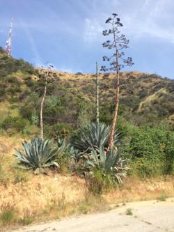 Old Plants