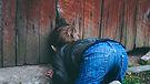 photo-of-boy-peeking-on-brown-wooden-fen