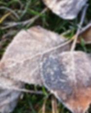 blad met ijs.jpg
