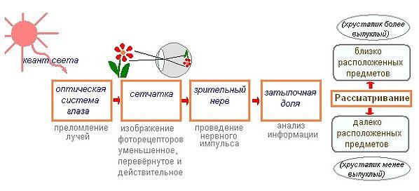 Mv2ii0LTEgs.jpg