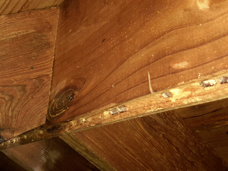 Do I need a termite inspection?