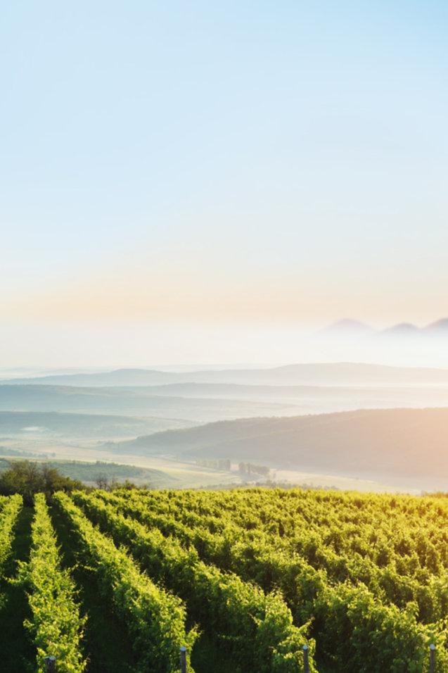 Kate Kisset ~ Love in the Vineyards Series