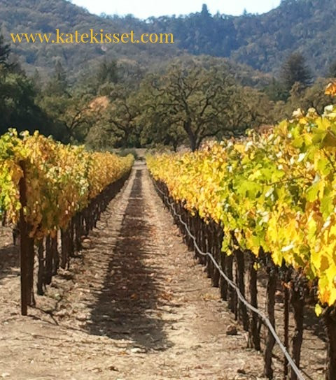Kate Kisset, Autumn in the Vineyard photo, Vineyards in Yountiville