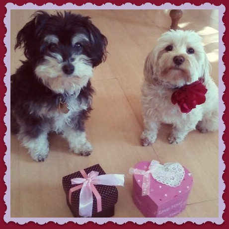 Happy Valentine's Day from Lucianna Parmigiana and her cousin Higgins