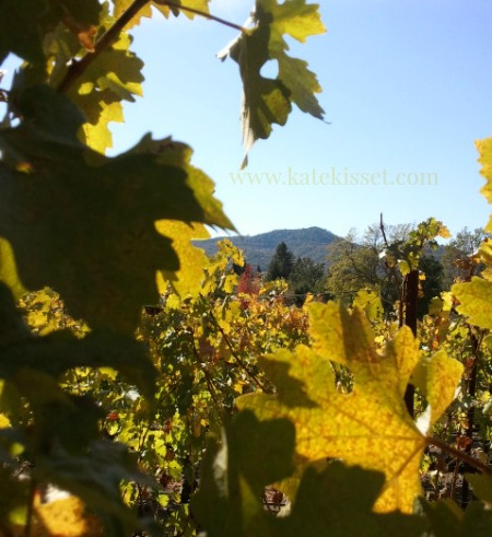 Autumn in the vineyard, Kate Kisset photo.
