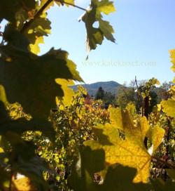 Autumn in the vineyard, Kate Kisset photo.