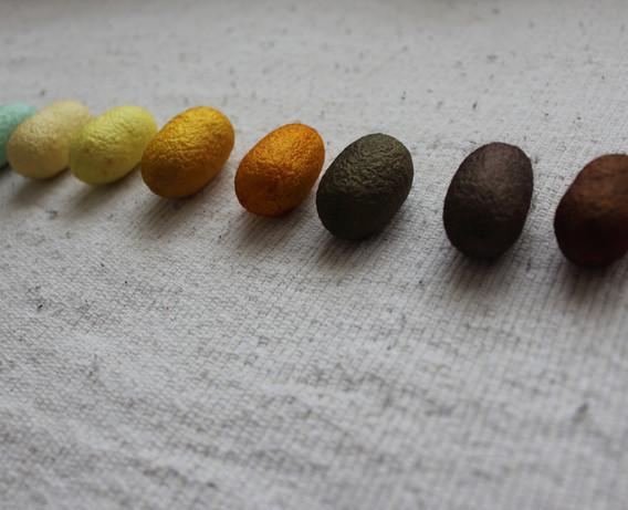 繭(ぐんま200)Silk Cocoons (Gunma 200)