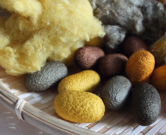 繭、真綿、和綿 Silk Cocoon, Silk Hankie, Japanese Cotton [マリーゴールド、アボカド  marigold, onion] 2021/1