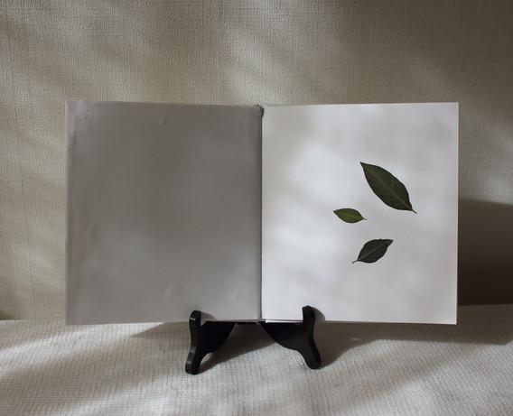 [蓼藍葉 / Japanese Indigo plant leaves]