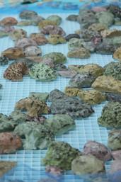 200 replica corals