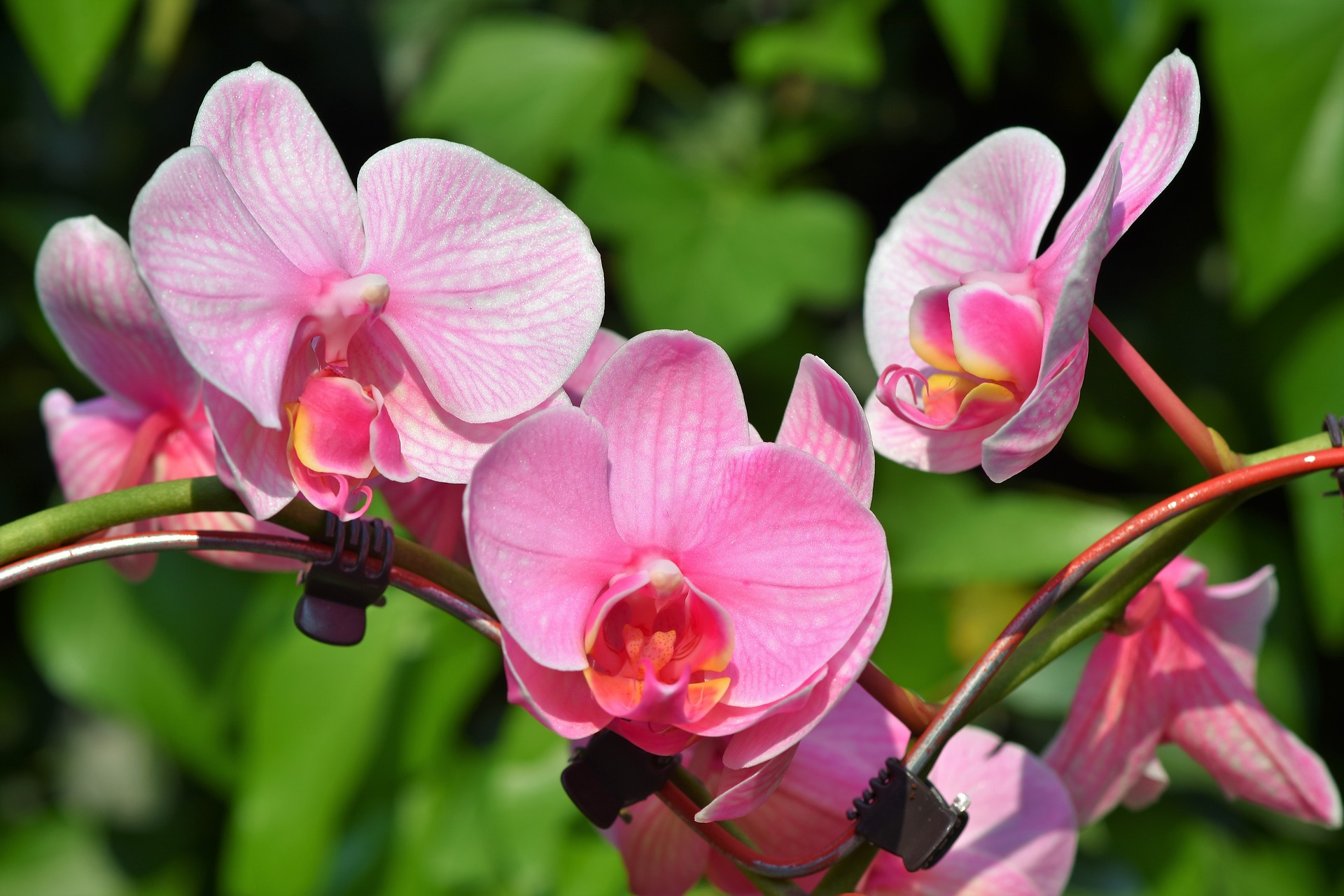 orchids-3392819_1920