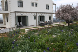 Rear patio form the olive grove