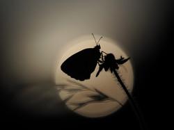 Sundown silhouette_1920