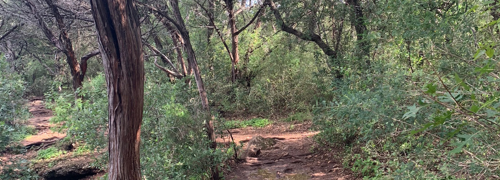 Greenbelt: The raw trails in greenbelt